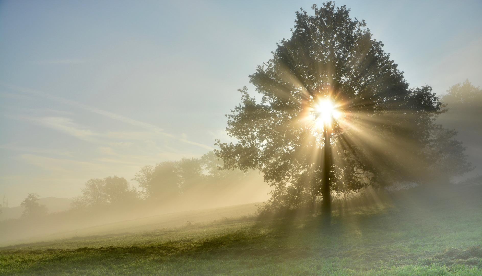 das Licht und der Nebel heute morgen