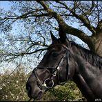 Das liebste Pferd, das ich kenne :-)