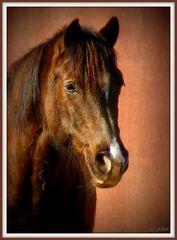 Das Lomographie - Pferd
