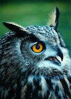 das Magische Auge...