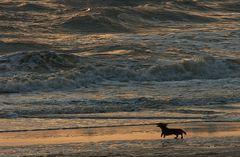 Das Meer anbellen