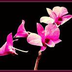 Das Mittwochsblümchen