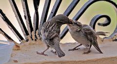 das mußte ich imer jeden tag in egypten auf unserem balkon ansehen wenn ich frühstücken wollte teil2