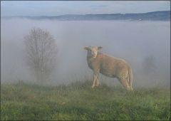 Das Nebelschaf