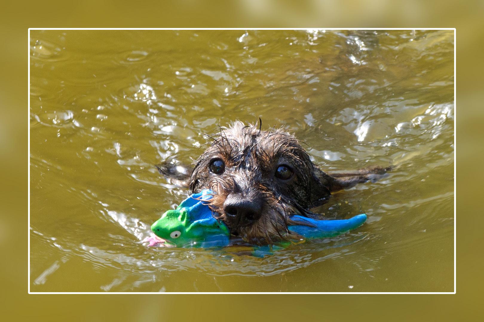 Das nennt man Wasserfreude!!!
