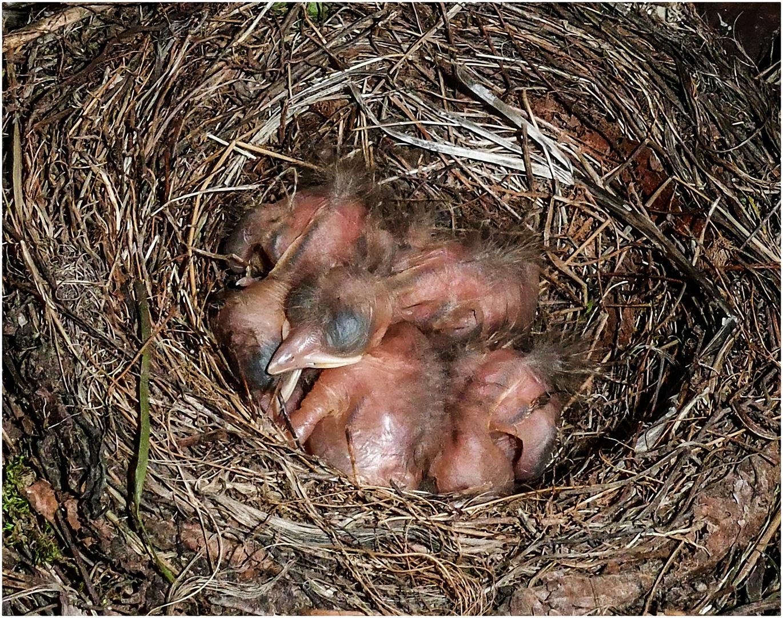 Das Nest ist voll !