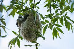Das Nest noch ein wenig ausbessern..