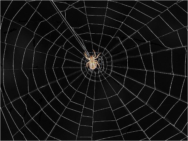 ²~²~²  Das Netz ²~²~²