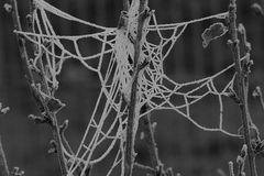 Das Netz der Eisspinne