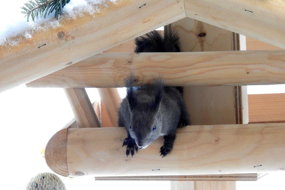 das neue futterhaus für die vögel foto  bild  tiere