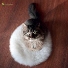 Das neue Katzenkissen :-)