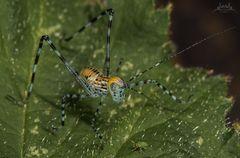 Das neuste Mitglied meiner Insektenfamilie...