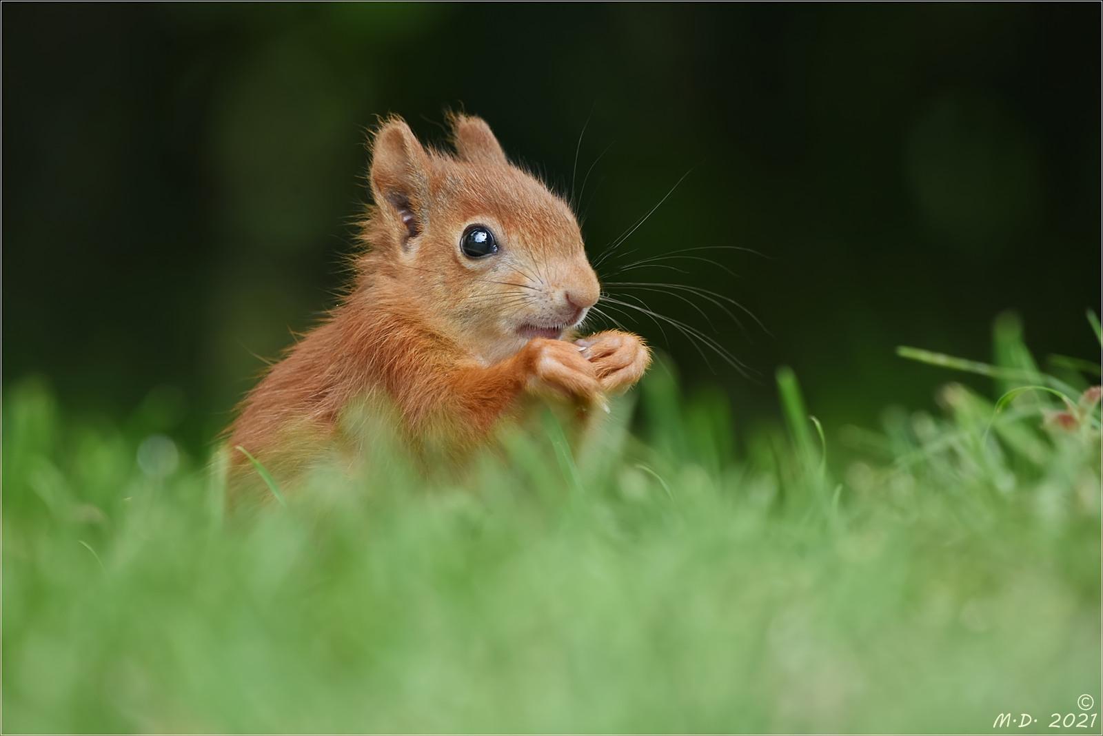 Das niedliche Eichhörnchenkind  ...