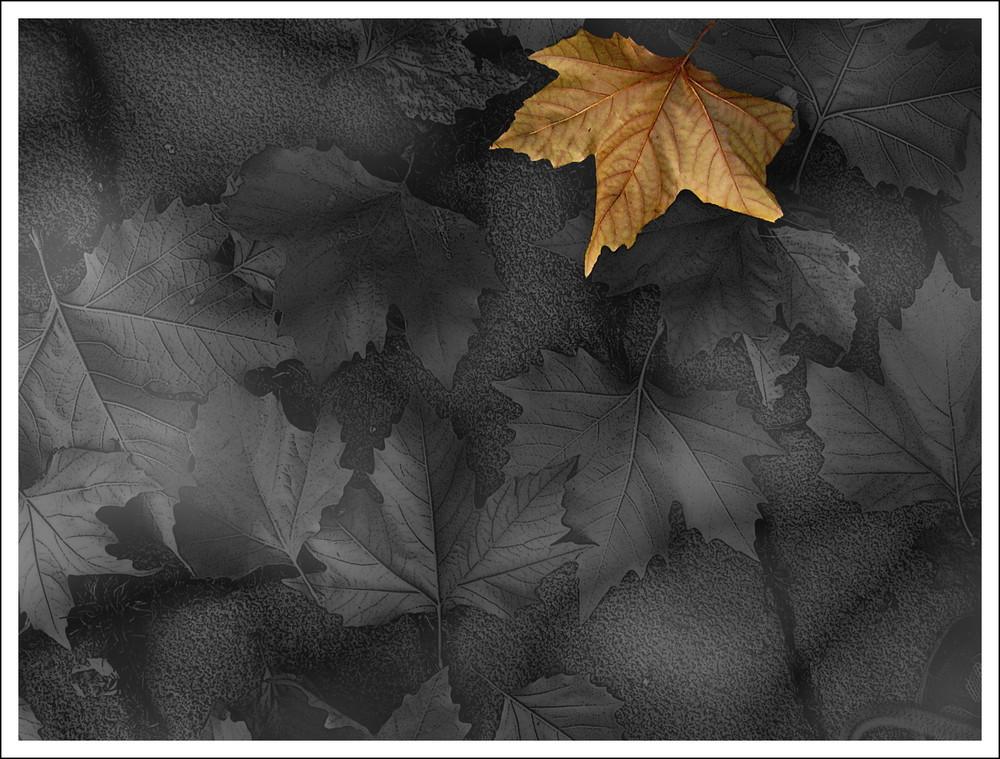 Das Novembergrau vertreibt die warmen Töne