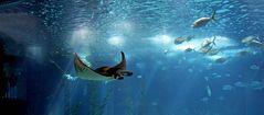 das oceanário de lisaboa ist das coolste was ich je gesehen habe