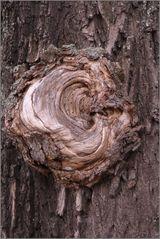 das OHR des Baumes