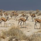 Das Oryx :-)