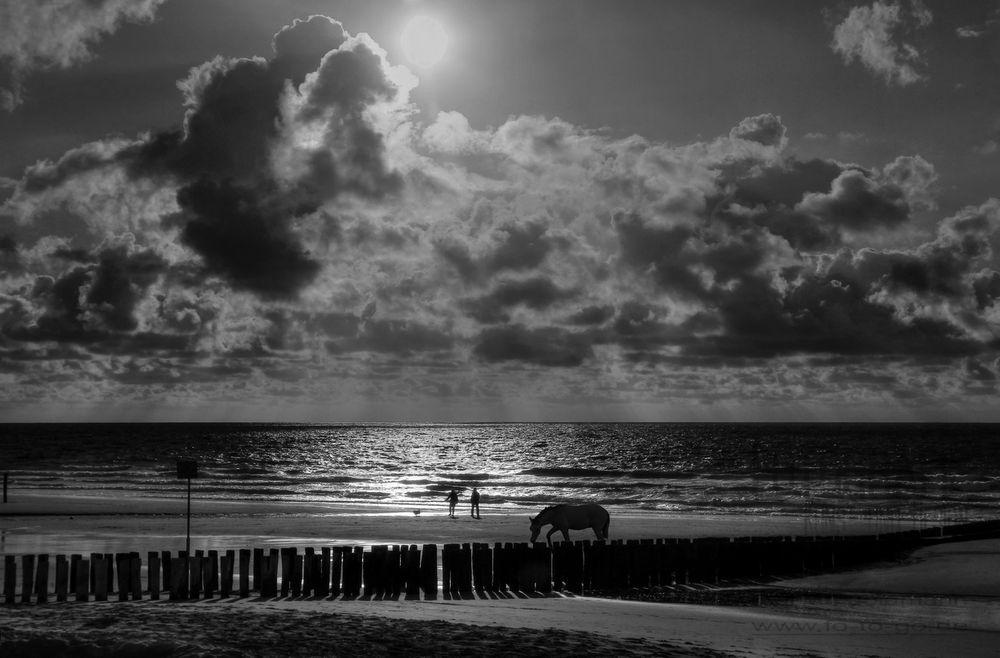 Das Pferd am Strand