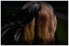 Das Pferd beim Schwanz aufzäumen
