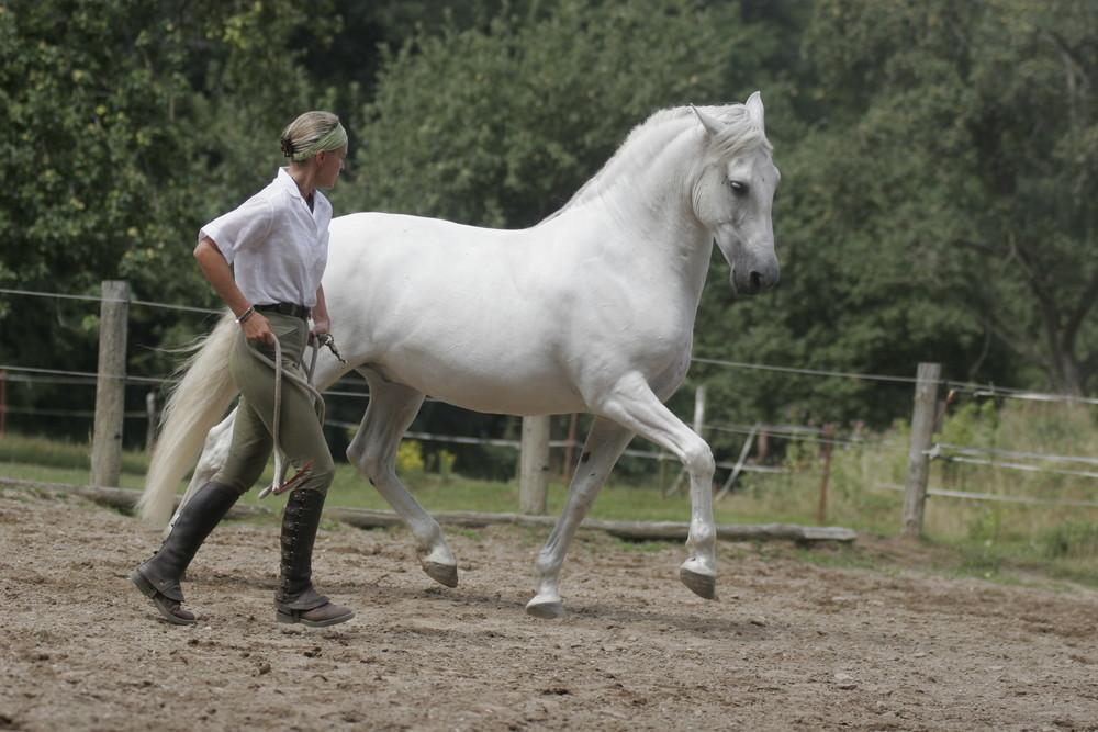 Das Pferd .... dein Spiegel !