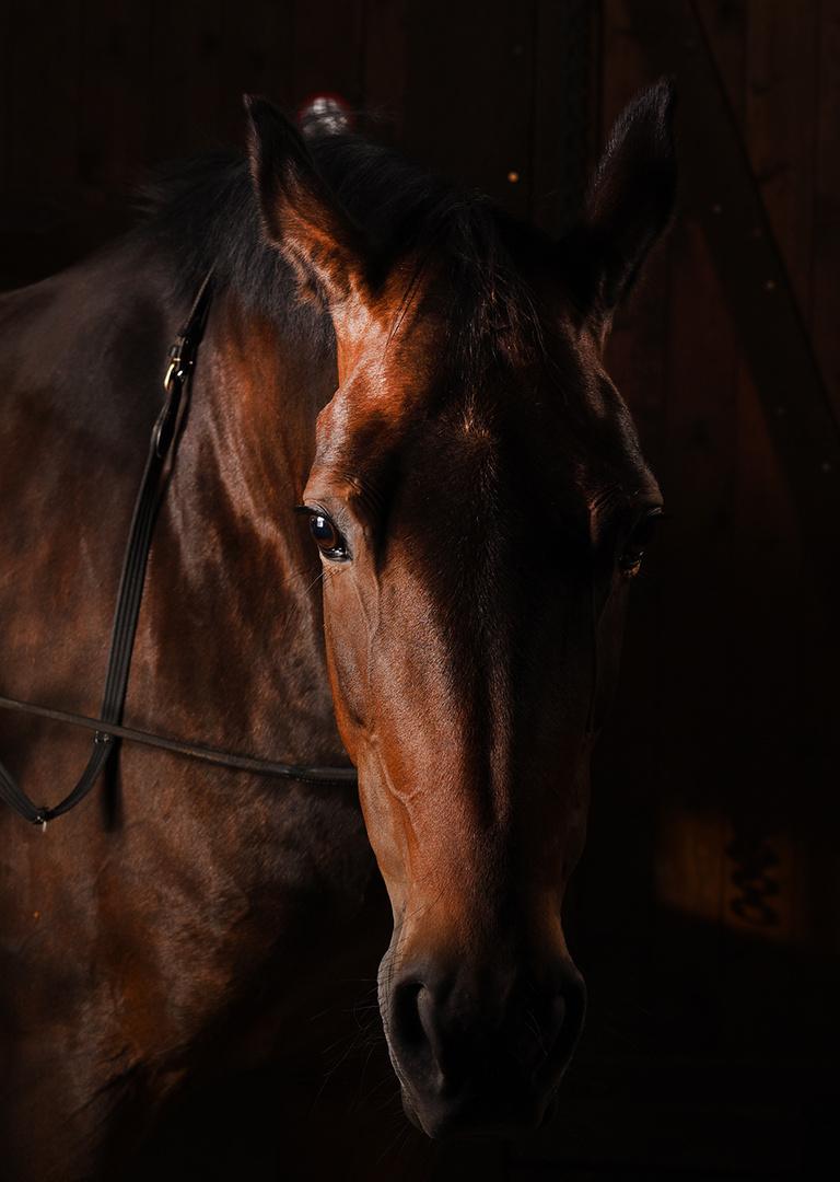 """Das Pferd """"Luna"""" als Model"""