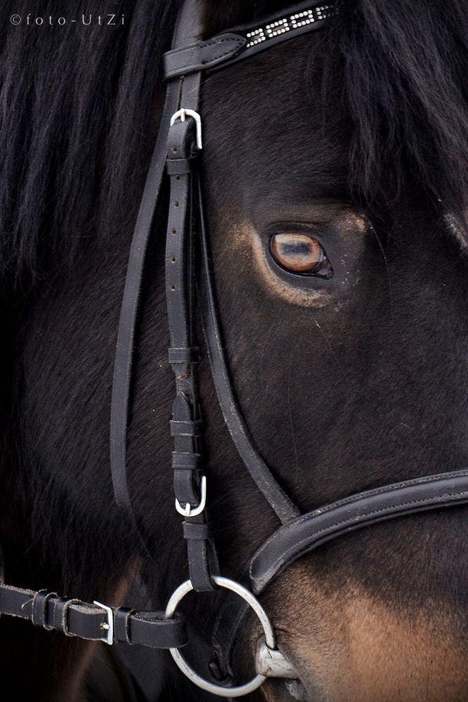 Das Pferd mit den Ziegen-Augen