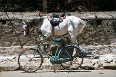 Das Pferd und sein Fahrrad