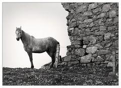 Das Pferd von Rinvyle Castle