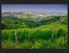 Das Piemonte der Rebberge