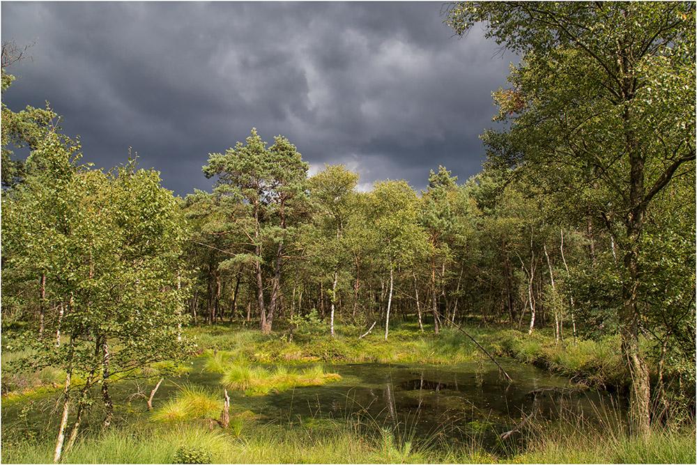 Das Pietz Moor vor dem Regen