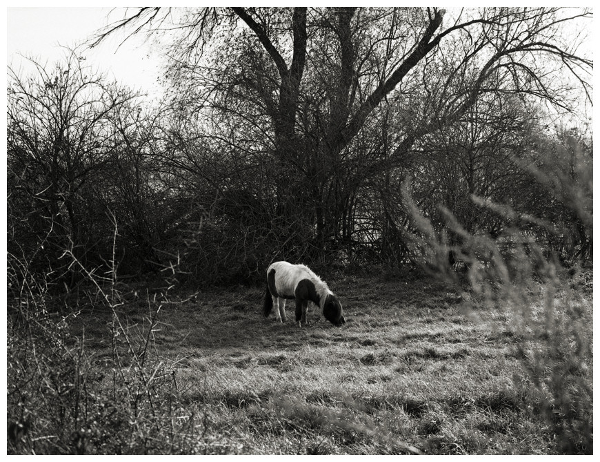 Das Pony...