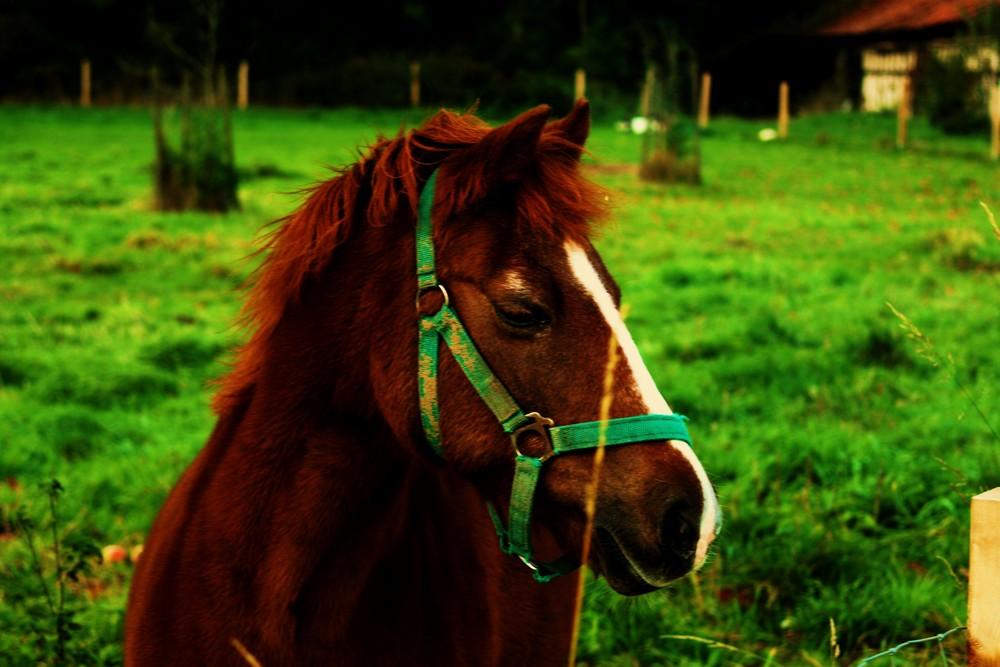 Das Pony genießt die Herbstsonne