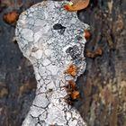 Das Porträt vom Eismann: Skulptur von Künstlerin Natur! - Le portrait du bonhomme de glace..!