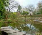 Das Quaken im Teich ..