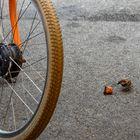 Das Rad und der hungrige Spatz