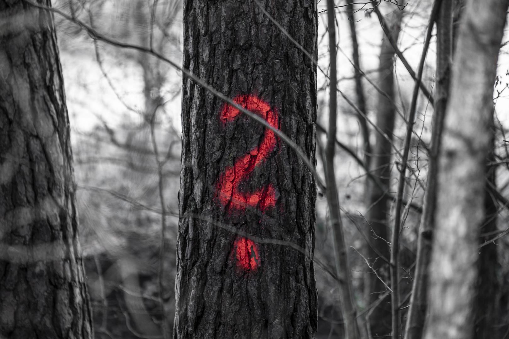 ? - Das Rätsel im Wald