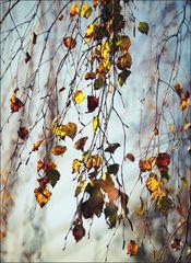 Das Rascheln der Blätter
