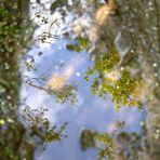 Das Rauschen der Blätter
