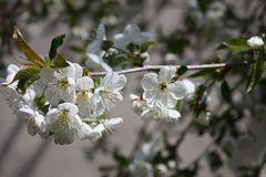 das reinste Frühlingswetter kurz vor Heilig Abend