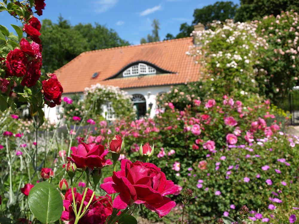 Das Rosarium in Glücksburg