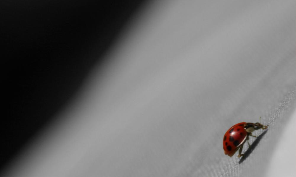 das rote Krabbeln