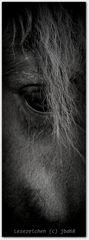 Das Schicksal schenkt dir ein Pferd – reiten mußt du es alleine.