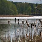Das Schilf und der See