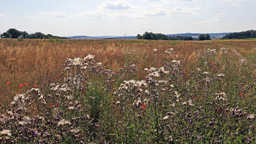 Das Schmetterlingsbiotop bei Burkhartswalde und im HG links...