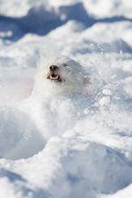 Das Schneemonster