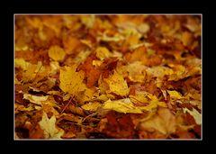 Das Schöne am Herbst