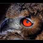 das schöne Auge einer Eule.......