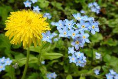 das schönste Blau