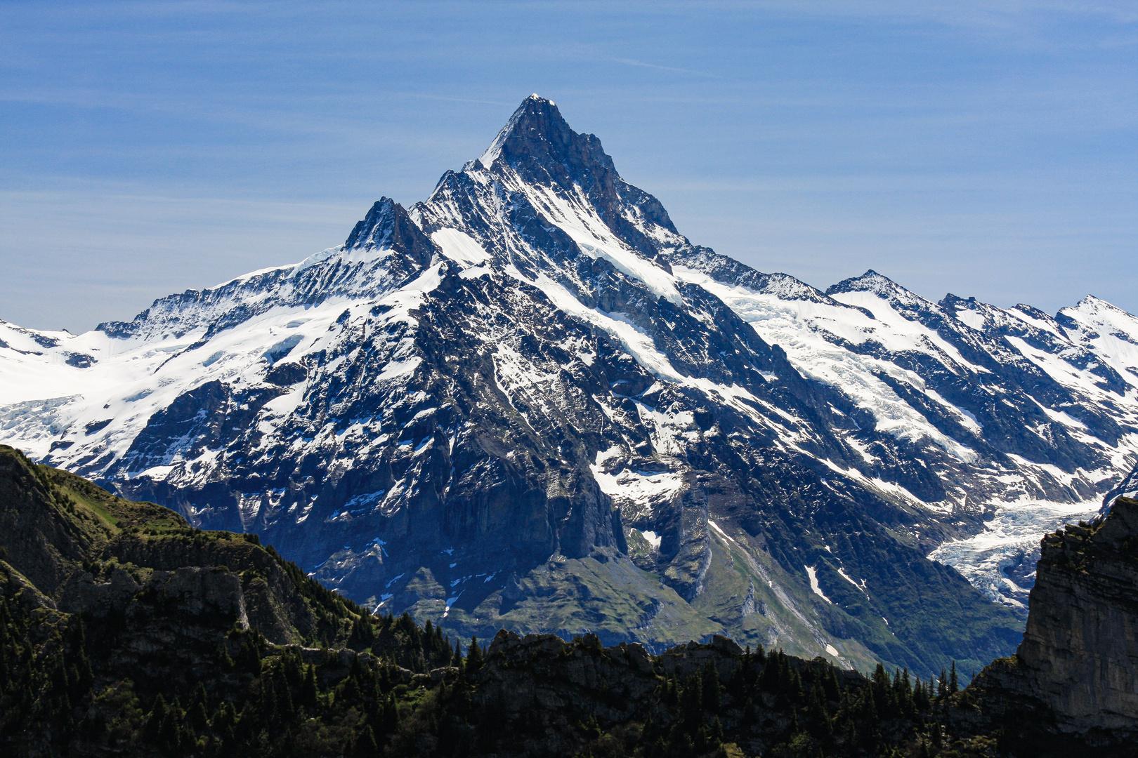 Das Schreckhorn (4078 m) (1)