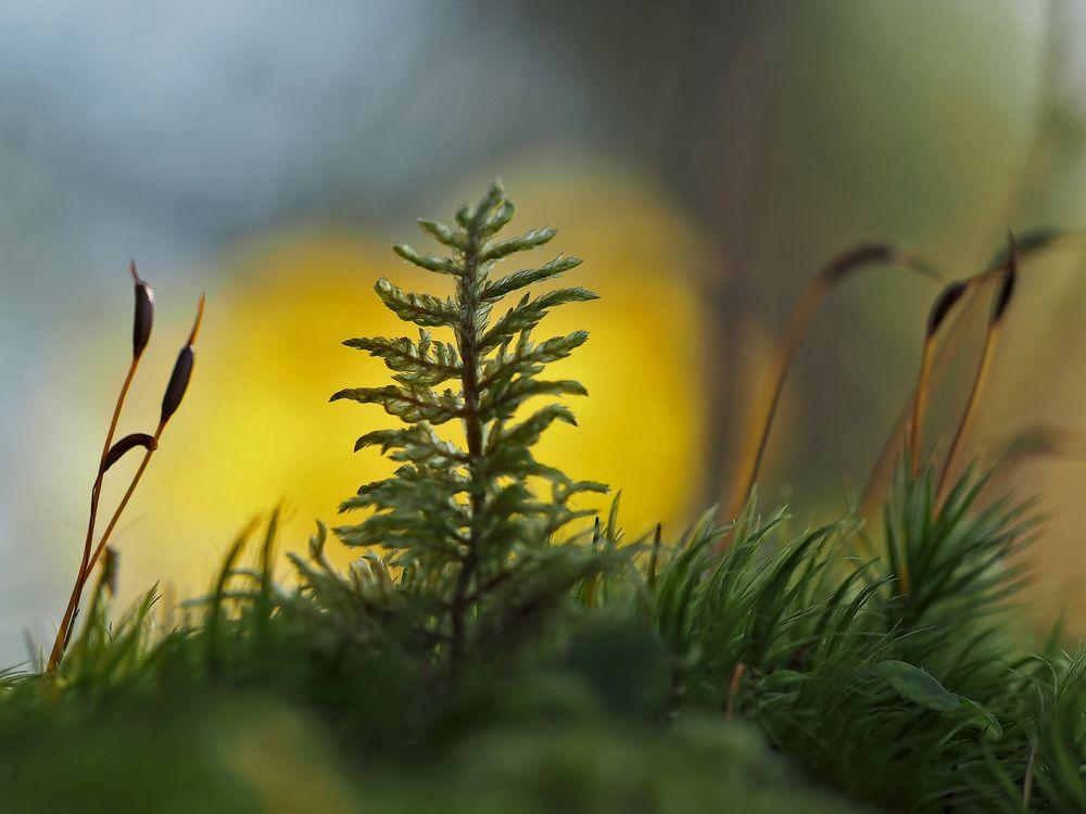 Das Schweigen des Waldes... - Le silence de la forêt.